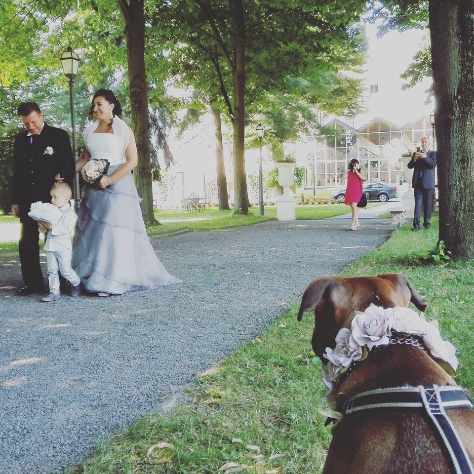 Wedding Pet Sitter