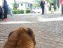 Wedding Pet Sitter - Orma Di Maya