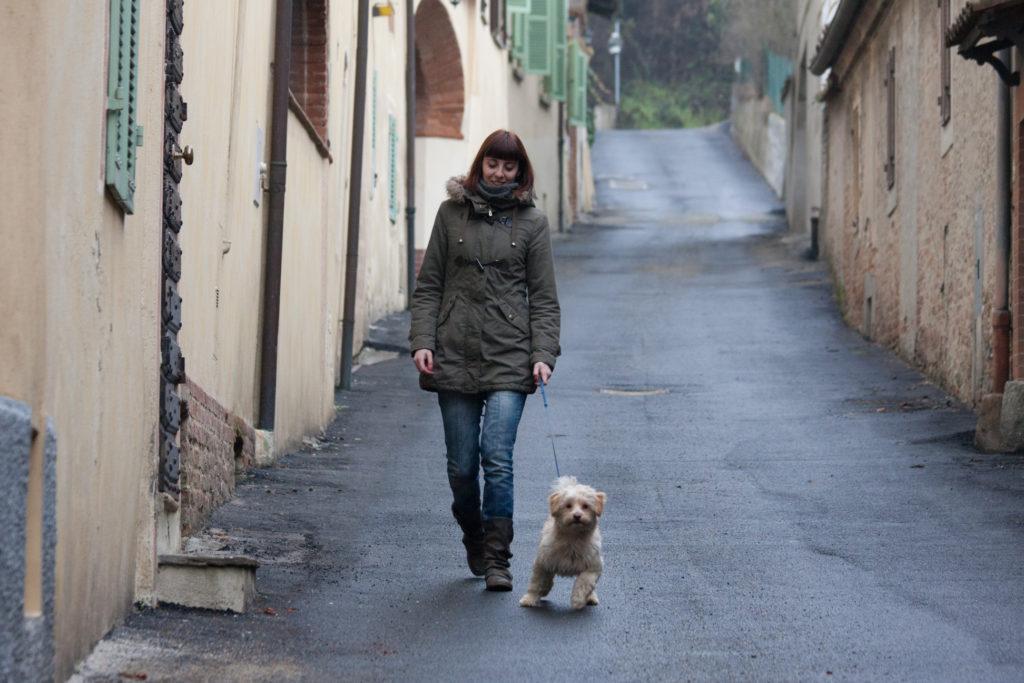 DOG WALKER DOG SITTER