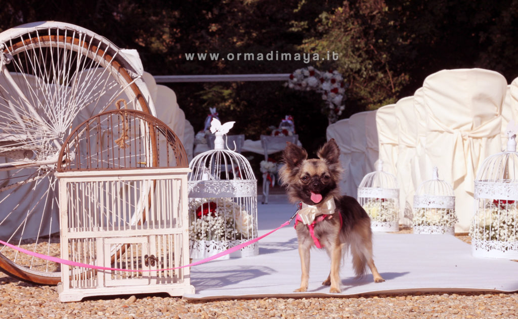 Wedding Dog Sitter ORMA DI MAYA - Torino