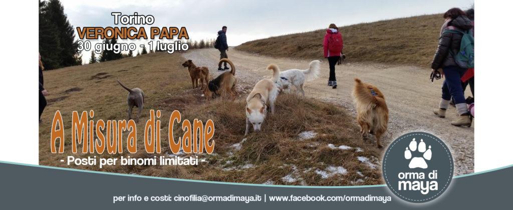 """""""A MISURA DI CANE"""" di Veronica Papa"""