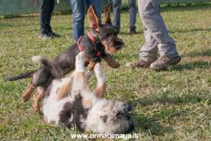 Puppy Class - ORMA DI MAYA
