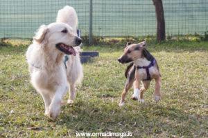 Puppy Class ORMA DI MAYA