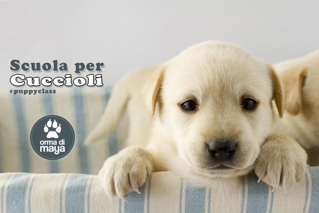 promo-puppy