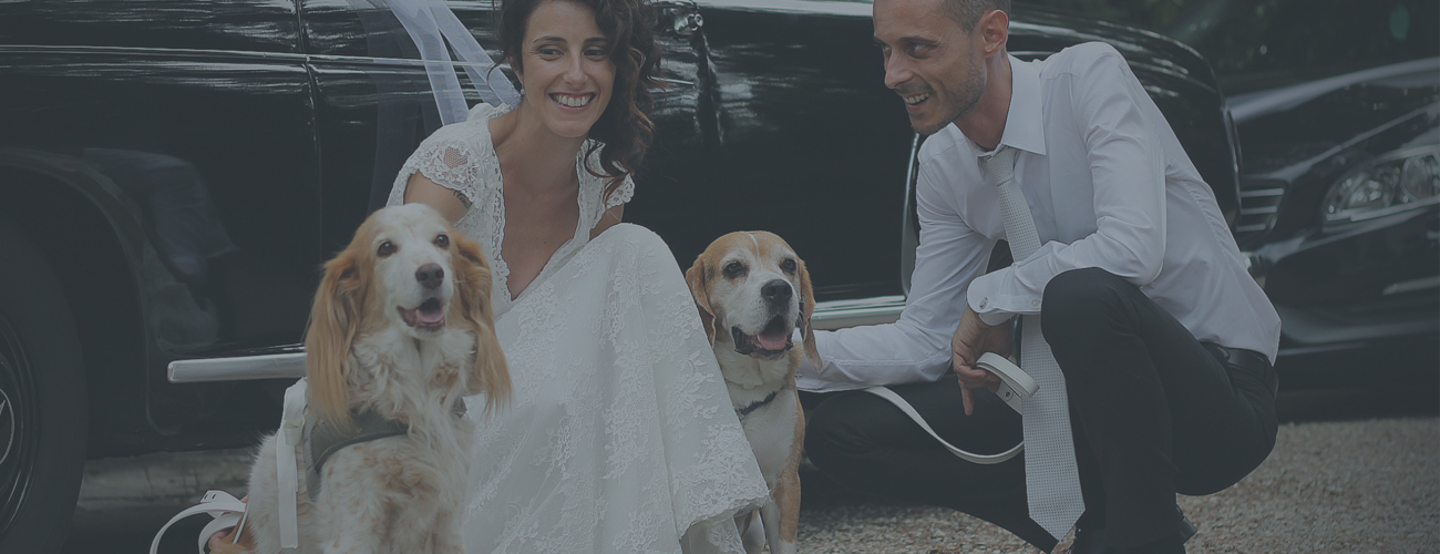 WEDDING PET SITTER