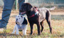 Puppy Class - scuola per cuccioli